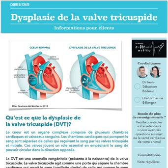 Dysplasie de la valve tricuspide