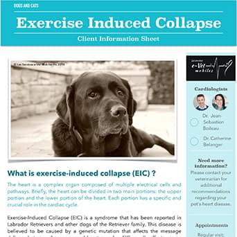 Exercise Induced Collapse